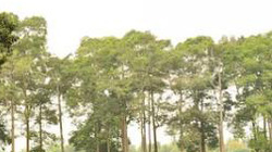 Châu Thành (Trà Vinh): Hỗ trợ đất ở cho hộ Khmer nghèo