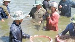 Không nuôi tôm thẻ ở vùng nước ngọt