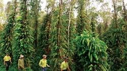 Bảo vệ rừng như bảo vệ cơ thể mình
