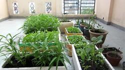 Sợ đồ Trung Quốc, người Sài Gòn thùng to thùng nhỏ trồng rau trên sân thượng