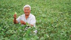 Sử dụng phân bón Văn Điển cho cây đậu - lạc