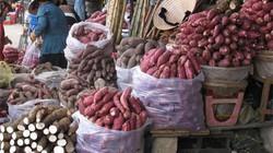 Giá khoai lang tím giảm mạnh