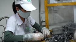 Đồng Nai: Doanh nghiệp Trung Quốc, Đài Loan đã hoạt động trở lại