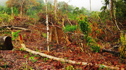 Vụ phá 25,3ha rừng phòng hộ tại Khánh Hòa: Chủ rừng có vô can?