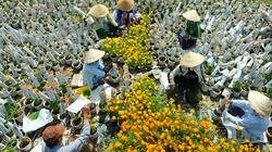 Hoa cho chợ tết