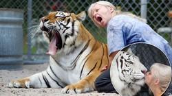 """Choáng váng vì hàng xóm nuôi cặp hổ """"siêu khủng"""" trong vườn"""