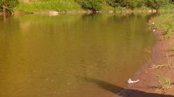 Vượt sông thu hoạch chuối, hai cha con chết đuối