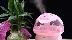 7 mẹo cực kì hữu hiệu để giảm nhiệt cho ngôi nhà ngày nóng