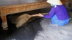 Tây Ninh: Hàng triệu con bọ đậu đen bay vào nhà dân