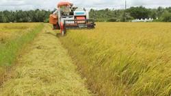 Doanh nghiệp Nhật Bản tìm cơ hội ở nông nghiệp