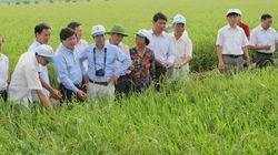 Việt Nam chủ động 50% giống lúa lai