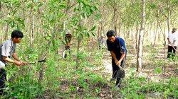 Diện tích rừng giao khoán bảo vệ tăng 57%