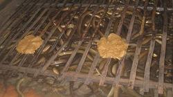 TP.HCM: Hướng dẫn nông dân nuôi lươn nước sạch