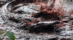 Kinh hoàng loài cá sấu nuốt chửng cả Trung đoàn Nhật