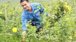 Tới Vĩnh Phúc thăm trang trại hoa bạc tỷ của chàng trai tuổi 28