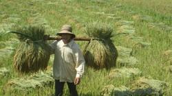 Nông dân giỏi  cắm chốt vùng khó