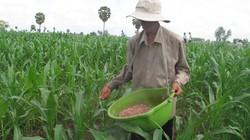 Chuyển đổi 112.000ha đất lúa: Sớm công bố  mức hỗ trợ nhà nông