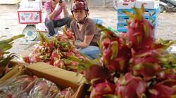Xuất khẩu sang Trung Quốc: Nhiều hàng nông sản gặp khó