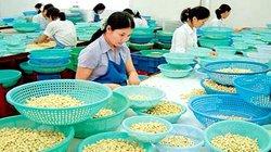 Cơ hội lớn cho hạt điều vào siêu thị Mỹ, Nhật