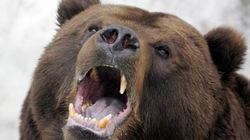 """Sống sót nhờ """"thuộc bài"""" giả chết lừa 3 con gấu"""