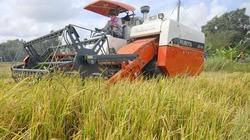 Lúa hè thu sớm lãi trên 20 triệu đ/ha