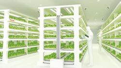 Hãng điện tử Toshiba chuyển hướng sang... trồng rau
