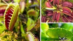 Cây xác chết và những loài thực vật kỳ lạ nhất thế giới