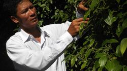 """Anh nông dân Đồng Nai nhẹ nhàng """"cuỗm"""" danh hiệu """"Người trồng tiêu giỏi nhất thế giới"""""""