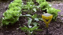 Kết nối wifi, dùng điện thoại thông minh theo dõi... cây trồng