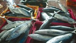 Tổ chức khai thác cá ngừ đại dương theo chuỗi