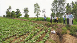 Hà Tĩnh: 170 tỷ đồng cho nông sản chủ lực