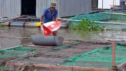 Hỗ trợ phát triển thủy sản: Đầu tư hạ tầng, cho vay lãi thấp