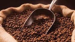 Giá cà phê tăng mạnh trở lại