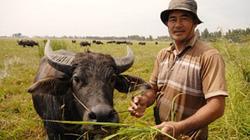 Người chăn trâu thuê thành 'tỷ phú' nổi danh Tứ giác Long Xuyên