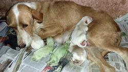Chó chào đời với bộ lông màu xanh kỳ dị