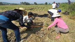 Dự báo sâu bệnh trên lúa và cây trồng tuần từ 16-22.6