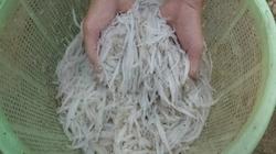 Hấp dẫn đặc sản cá nến của đồng bào Mường Sơn La