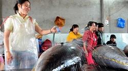 Nhật Bản giúp ngư dân Việt Nam đưa cá ngừ sang thị trường Mỹ