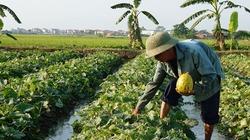 Kết nối giúp nông dân  tiêu thụ nông sản