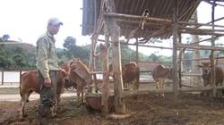 Quỳnh Nhai (Sơn La):  Đất ít, vẫn thu nhập khá