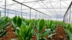 Khu nông nghiệp công nghệ cao khó thu hút đầu tư