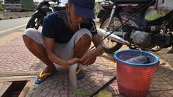 ĐỘC: Câu cá ở... cống thoát nước nơi vỉa hè Sài Gòn
