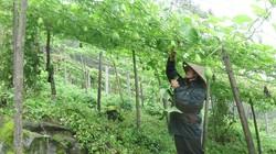 """Liên kết """"4 nhà"""": Nền móng để nông nghiệp phát triển bền vững"""