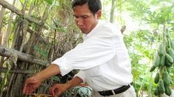 Gặp thầy giáo có tài... nuôi ong trong bọng dừa, thu nhập cao hơn dạy học