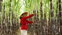 Xây dựng nông thôn mới tại Khánh Hòa : Bí quyết từ đầu tư và lồng ghép