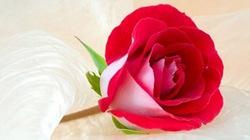 10 loại hoa kích thích ham muốn tình dục