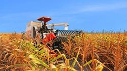 Thí điểm cho nông dân góp vốn bằng đất nông nghiệp