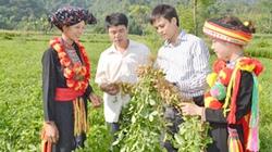 Thủ lĩnh đa năng ở Cao Bình: Vừa trẻ, vừa nói hay, vừa tài