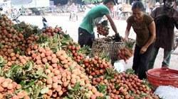 Bắc Giang: Thu hoạch 80 nghìn tấn vải thiều