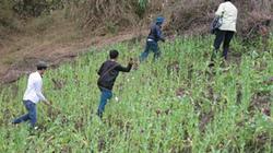 Cuộc chiến phòng chống ma túy nơi biên giới: Cậy nhờ tai mắt già làng, trưởng bản